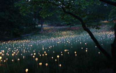 Field Of Light: Artist Uses 50,000 Lights To Turn Desert Into Surreal Fairytale